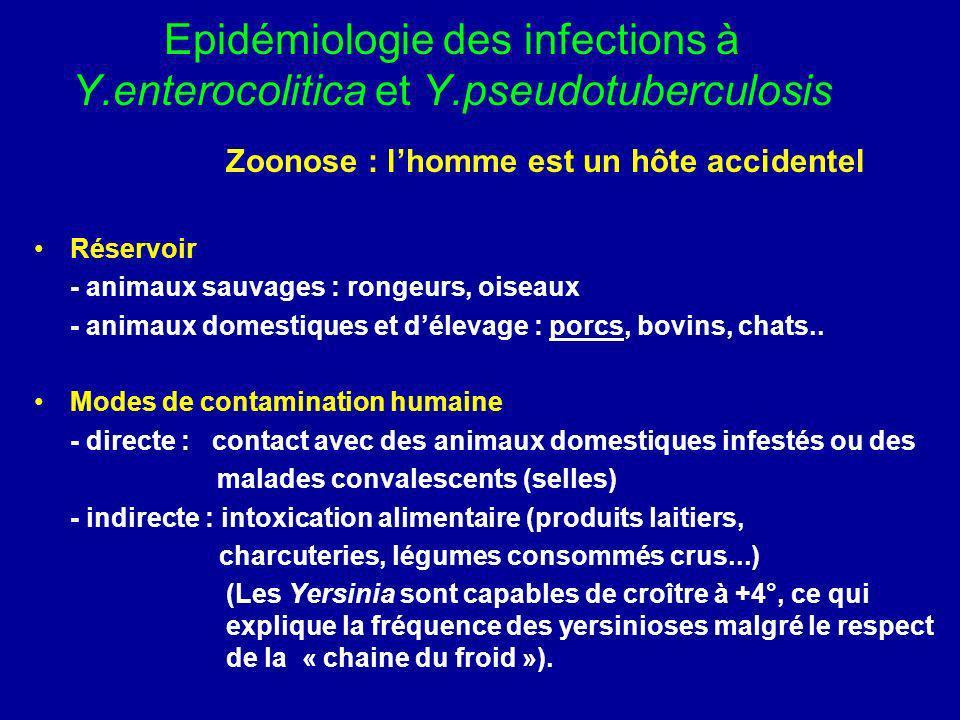 Epidémiologie des infections à Y.enterocolitica et Y.pseudotuberculosis Zoonose : lhomme est un hôte accidentel Réservoir - animaux sauvages : rongeur