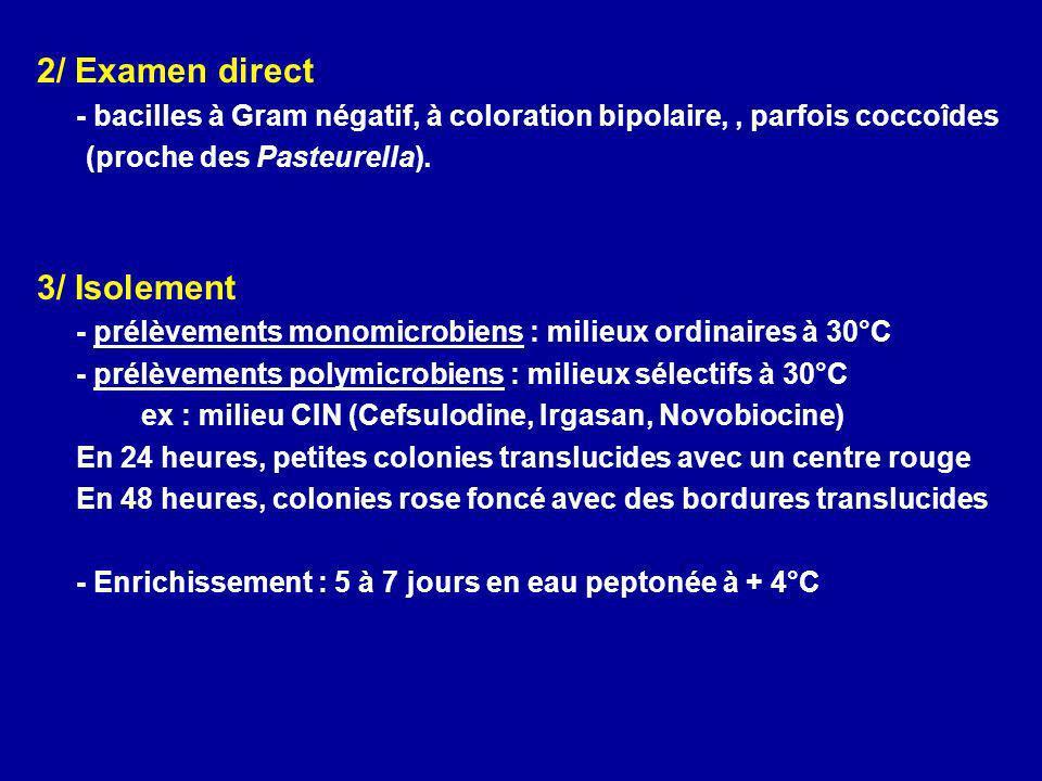 2/ Examen direct - bacilles à Gram négatif, à coloration bipolaire,, parfois coccoîdes (proche des Pasteurella). 3/ Isolement - prélèvements monomicro