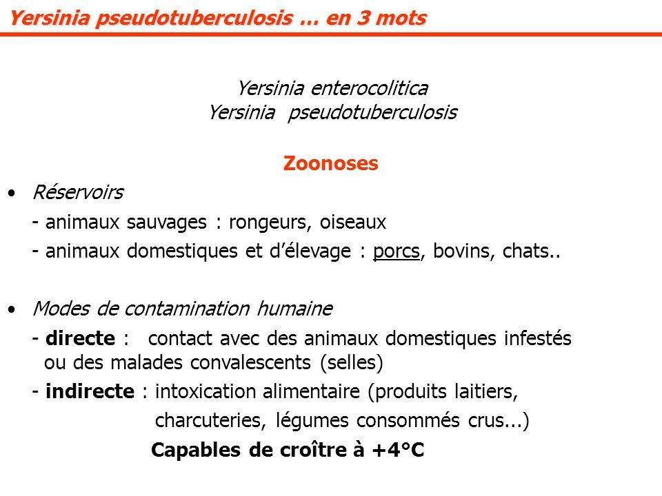 Yersinia pseudotuberculosis … en 3 mots Yersinia enterocolitica Yersinia pseudotuberculosis Zoonoses Réservoirs - animaux sauvages : rongeurs, oiseaux - animaux domestiques et délevage : porcs, bovins, chats..