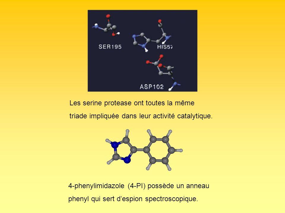 Les serine protease ont toutes la même triade impliquée dans leur activité catalytique. 4-phenylimidazole (4-PI) possède un anneau phenyl qui sert des