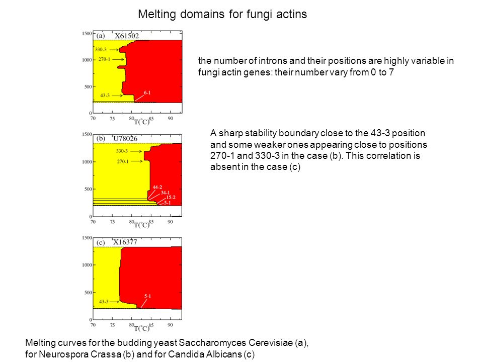 the number of introns and their positions are highly variable in fungi actin genes: their number vary from 0 to 7 A sharp stability boundary close to