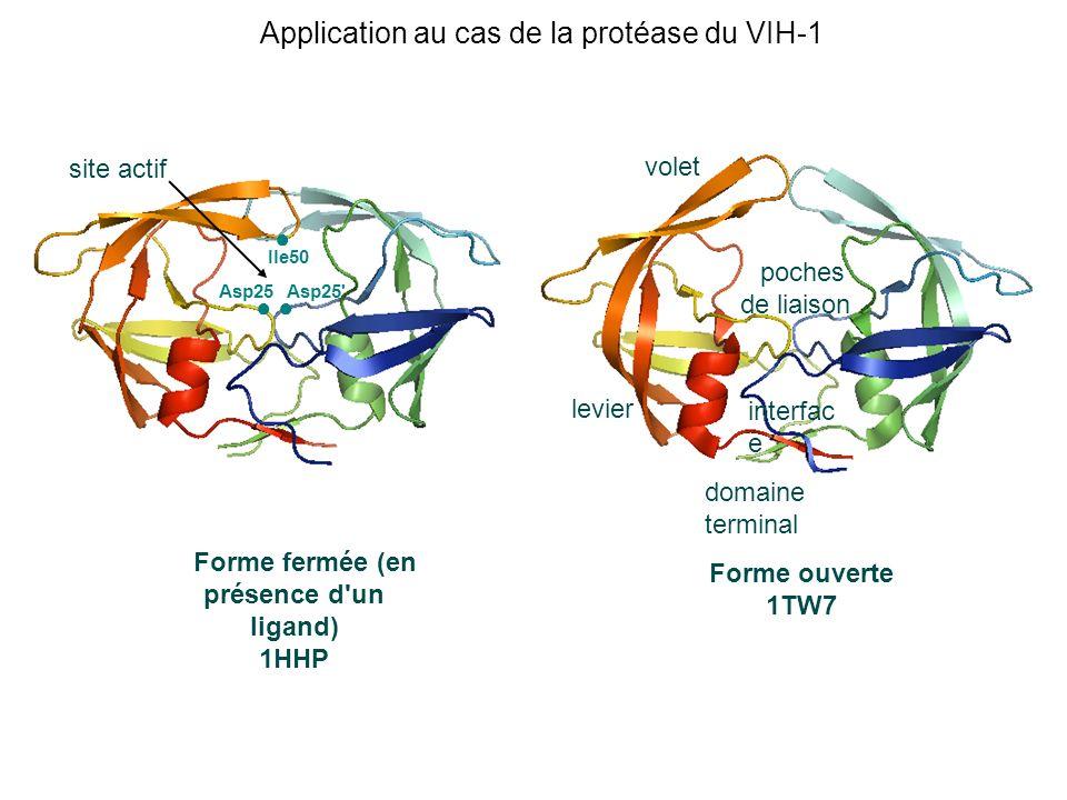 Asp25 Asp25' Ile50 Forme fermée (en présence d'un ligand) 1HHP Forme ouverte 1TW7 levier volet interfac e domaine terminal poches de liaison site acti