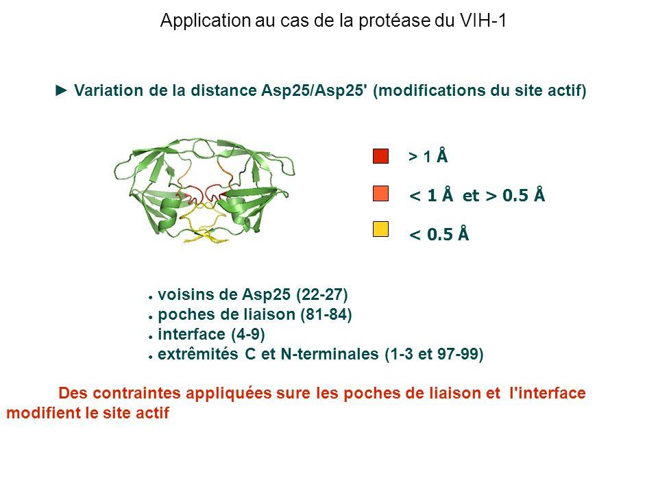 Variation de la distance Asp25/Asp25' (modifications du site actif) voisins de Asp25 (22-27) poches de liaison (81-84) interface (4-9) extrêmités C et