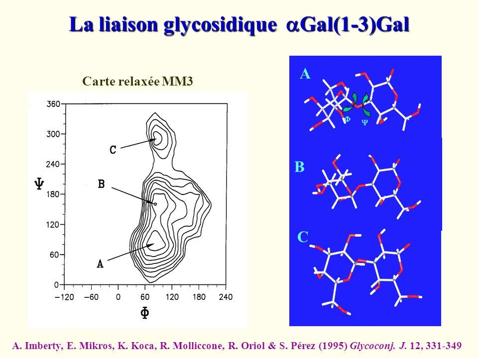 A B C La liaison glycosidique Gal(1-3)Gal Carte relaxée MM3 A. Imberty, E. Mikros, K. Koca, R. Molliccone, R. Oriol & S. Pérez (1995) Glycoconj. J. 12