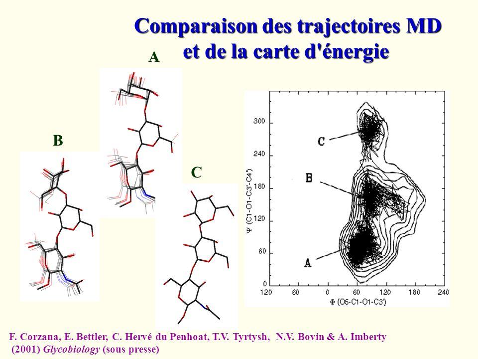 A B C Comparaison des trajectoires MD et de la carte d'énergie F. Corzana, E. Bettler, C. Hervé du Penhoat, T.V. Tyrtysh, N.V. Bovin & A. Imberty (200