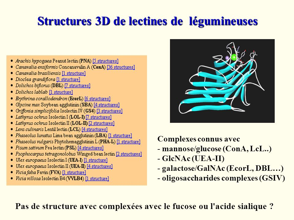 Structures 3D de lectines de légumineuses Complexes connus avec - mannose/glucose (ConA, LcL..) - GlcNAc (UEA-II) - galactose/GalNAc (EcorL, DBL…) - o
