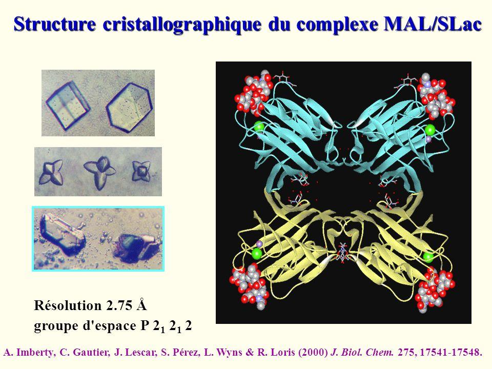 Structure cristallographique du complexe MAL/SLac Résolution 2.75 Å groupe d'espace P 2 1 2 1 2 A. Imberty, C. Gautier, J. Lescar, S. Pérez, L. Wyns &