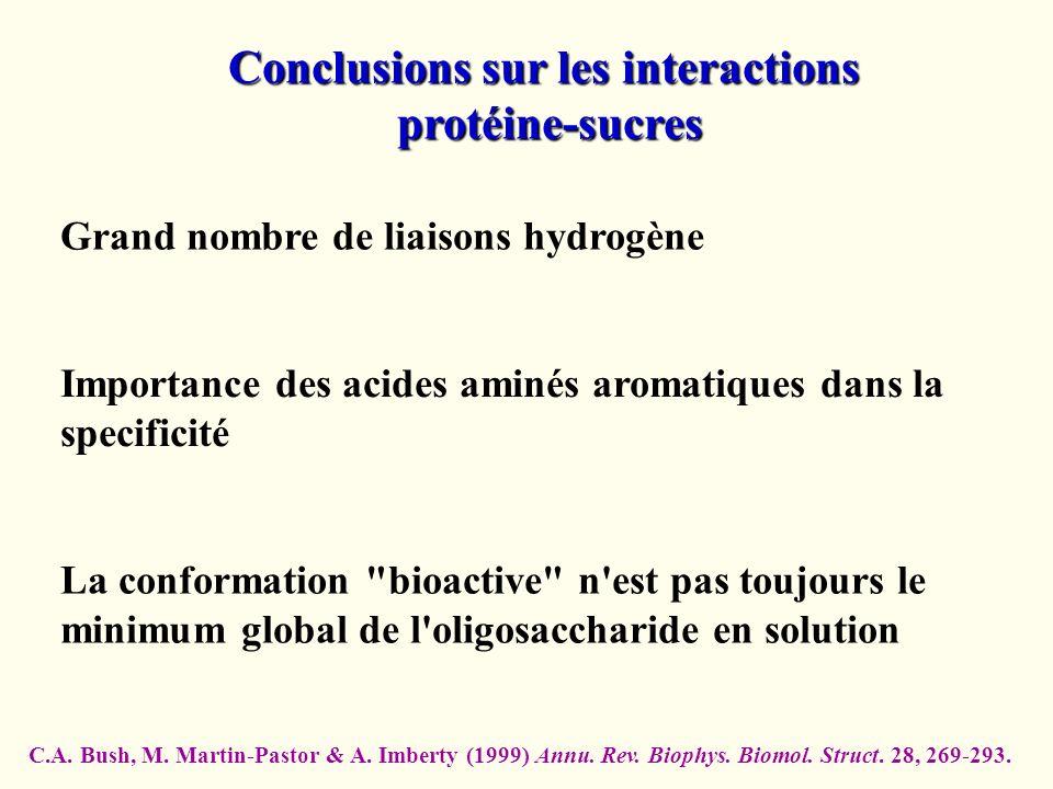Conclusions sur les interactions protéine-sucres protéine-sucres Grand nombre de liaisons hydrogène La conformation