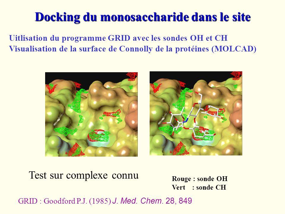 Docking du monosaccharide dans le site Uitlisation du programme GRID avec les sondes OH et CH Visualisation de la surface de Connolly de la protéines