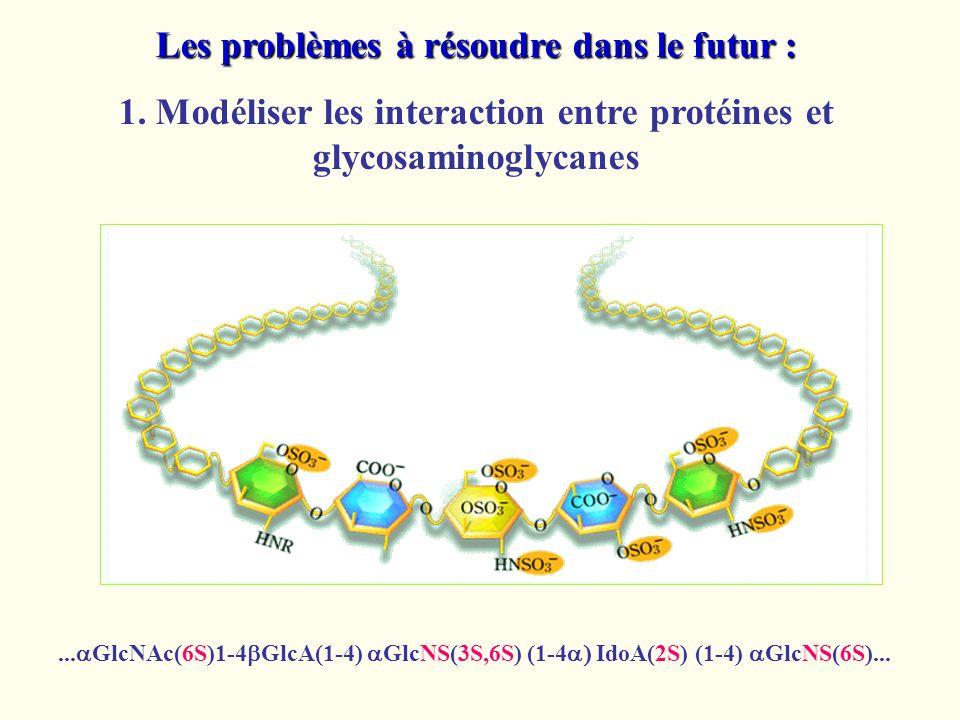 Les problèmes à résoudre dans le futur : 1. Modéliser les interaction entre protéines et glycosaminoglycanes... GlcNAc(6S)1-4 GlcA(1-4) GlcNS(3S,6S) (