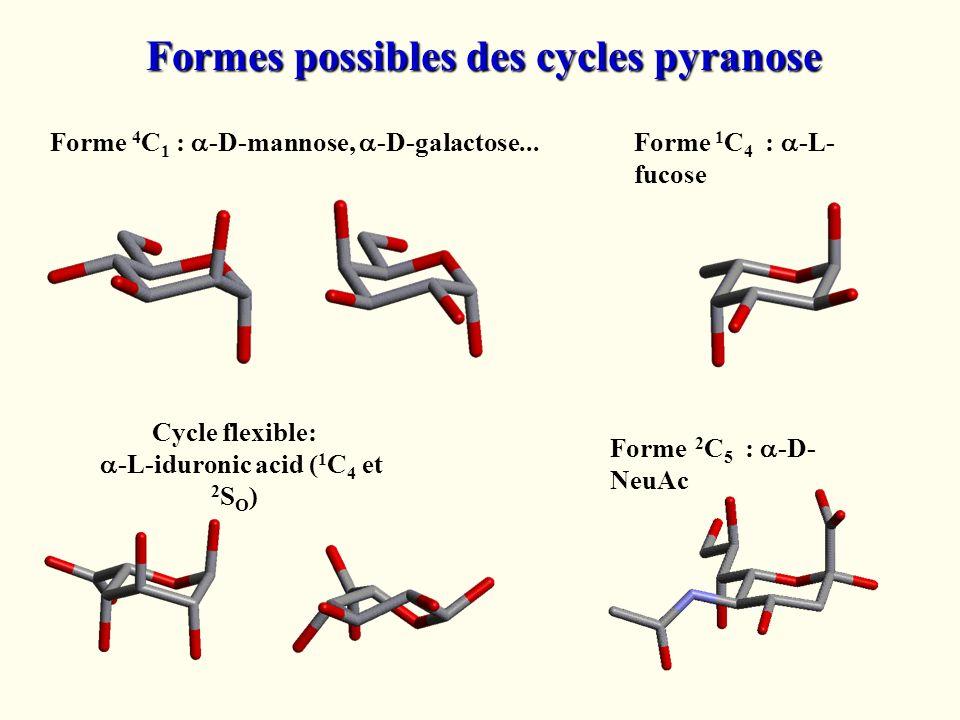 Forme 4 C 1 : -D-mannose, -D-galactose... Forme 1 C 4 : -L- fucose Forme 2 C 5 : -D- NeuAc Formes possibles des cycles pyranose Cycle flexible: -L-idu