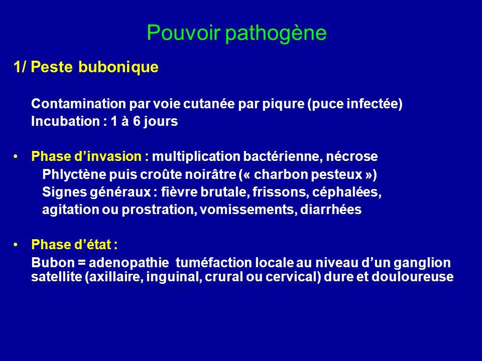 Pouvoir pathogène 1/ Peste bubonique Contamination par voie cutanée par piqure (puce infectée) Incubation : 1 à 6 jours Phase dinvasion : multiplicati