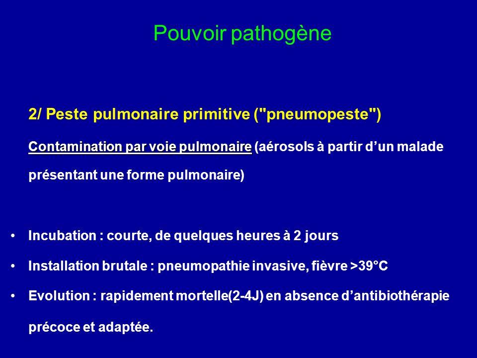 2/ Peste pulmonaire primitive (
