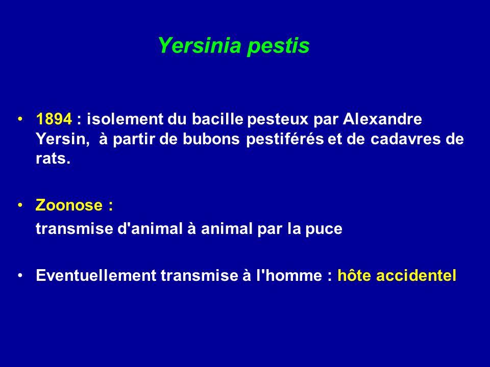 2/ Examen direct - bacilles à Gram négatif, à coloration bipolaire,, parfois coccoîdes (proche des Pasteurella).