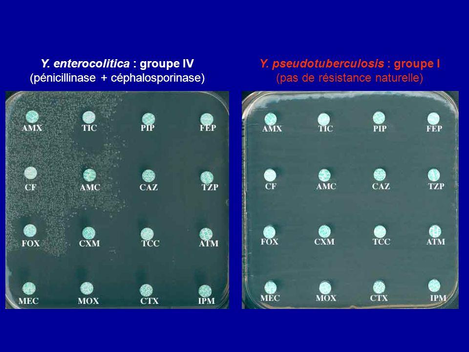 Y. enterocolitica : groupe IV (pénicillinase + céphalosporinase) Y. pseudotuberculosis : groupe I (pas de résistance naturelle)