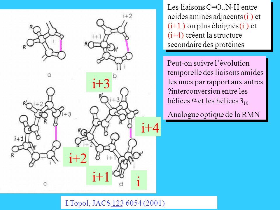 i i+1 i+2 i+3 i+4 Les liaisons C=O..N-H entre acides aminés adjacents(i )et (i+1 )ou plus éloignés(i )et (i+4)créent la structure secondaire des proté