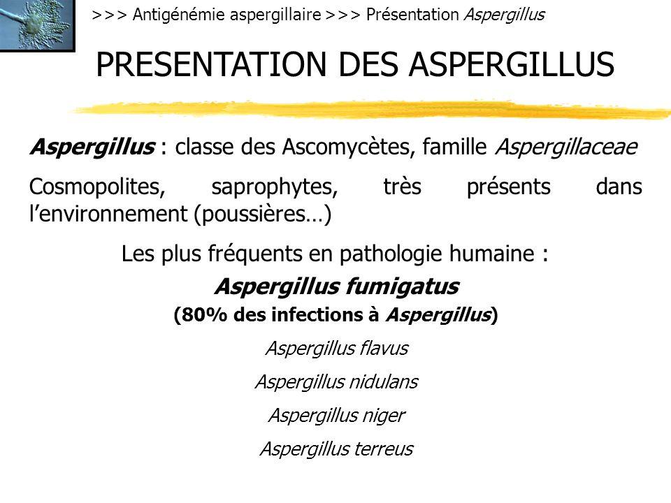 >>> Antigénémie aspergillaire >>> Présentation Aspergillus PRESENTATION DES ASPERGILLUS Aspergillus : classe des Ascomycètes, famille Aspergillaceae Cosmopolites, saprophytes, très présents dans lenvironnement (poussières…) Les plus fréquents en pathologie humaine : Aspergillus fumigatus (80% des infections à Aspergillus) Aspergillus flavus Aspergillus nidulans Aspergillus niger Aspergillus terreus