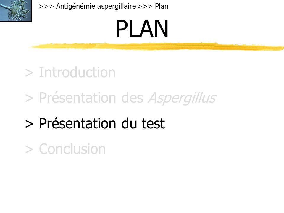 >>> Antigénémie aspergillaire >>> Plan PLAN > Introduction > Présentation des Aspergillus > Présentation du test > Conclusion
