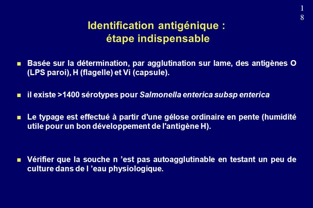 1818 Identification antigénique : étape indispensable n Basée sur la détermination, par agglutination sur lame, des antigènes O (LPS paroi), H (flagelle) et Vi (capsule).