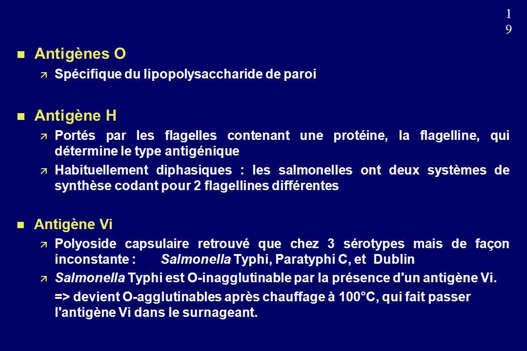 1919 n Antigènes O Spécifique du lipopolysaccharide de paroi n Antigène H Portés par les flagelles contenant une protéine, la flagelline, qui détermine le type antigénique Habituellement diphasiques : les salmonelles ont deux systèmes de synthèse codant pour 2 flagellines différentes n Antigène Vi Polyoside capsulaire retrouvé que chez 3 sérotypes mais de façon inconstante : Salmonella Typhi, Paratyphi C, et Dublin Salmonella Typhi est O-inagglutinable par la présence d un antigène Vi.