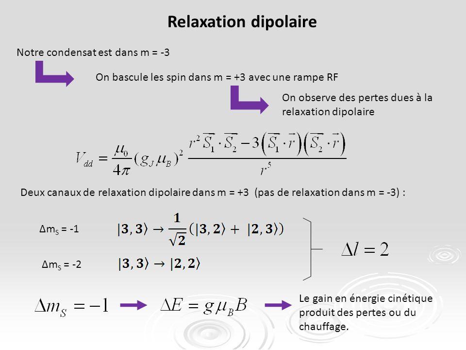 Deux canaux de relaxation dipolaire dans m = +3 (pas de relaxation dans m = -3) : Relaxation dipolaire Δm S = -1 Δm S = -2 Le gain en énergie cinétique produit des pertes ou du chauffage.