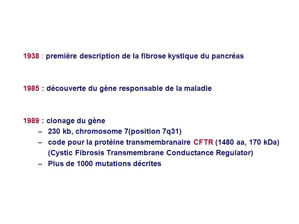 1938 : première description de la fibrose kystique du pancréas 1985 : découverte du gène responsable de la maladie 1989 : clonage du gène –230 kb, chr
