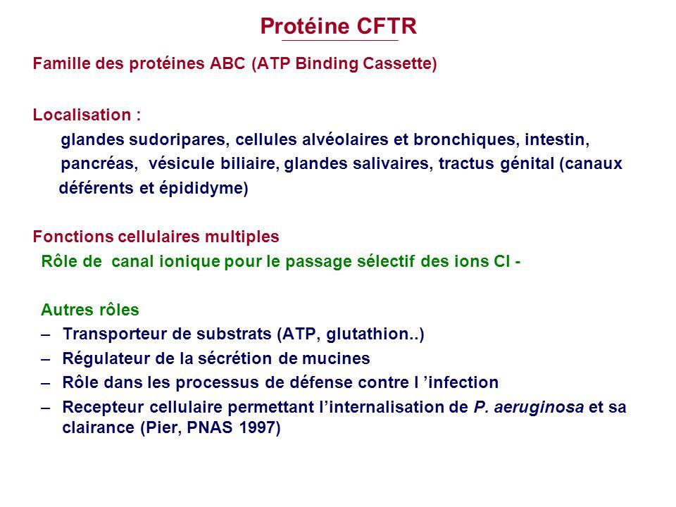 Protéine CFTR Famille des protéines ABC (ATP Binding Cassette) Localisation : glandes sudoripares, cellules alvéolaires et bronchiques, intestin, panc