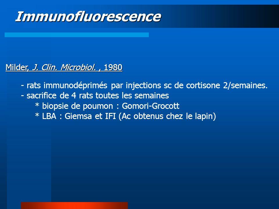 Immunofluorescence Milder, J. Clin. Microbiol., 1980 - rats immunodéprimés par injections sc de cortisone 2/semaines. - sacrifice de 4 rats toutes les