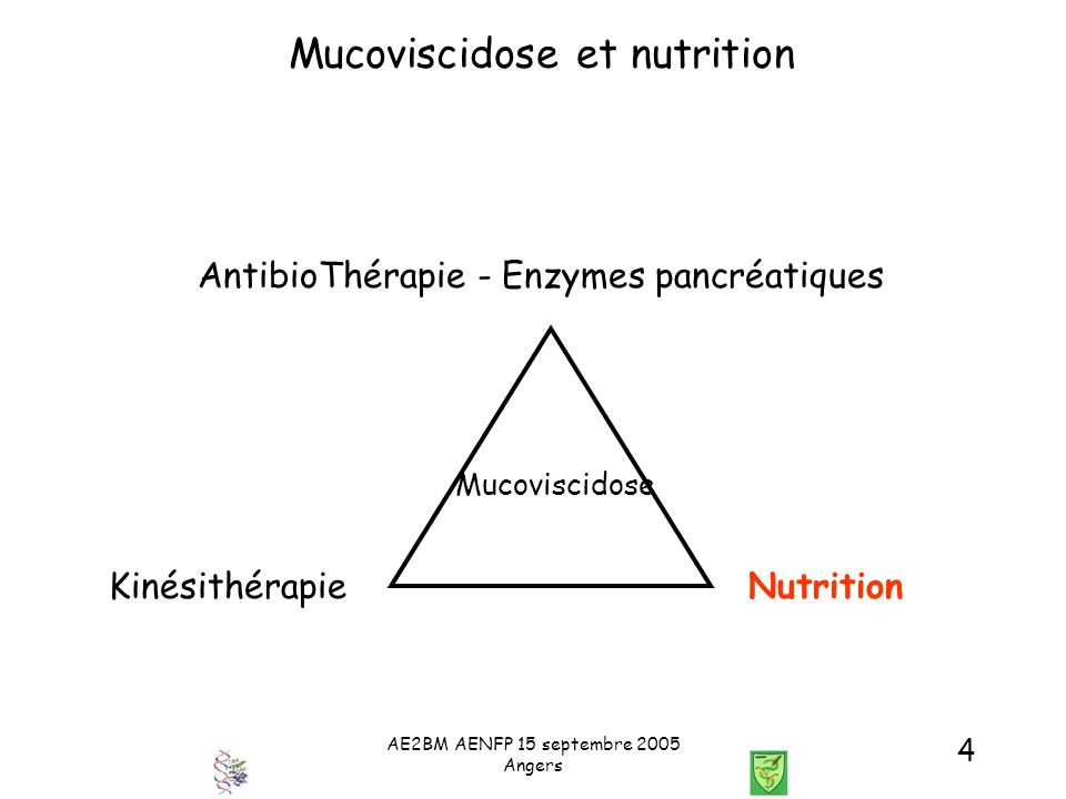 AE2BM AENFP 15 septembre 2005 Angers 4 Mucoviscidose et nutrition AntibioThérapie - Enzymes pancréatiques KinésithérapieNutrition Mucoviscidose