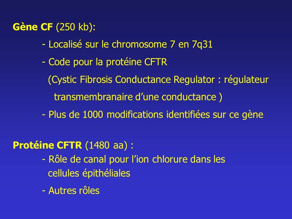 Gène CF (250 kb): - Localisé sur le chromosome 7 en 7q31 - Code pour la protéine CFTR (Cystic Fibrosis Conductance Regulator : régulateur transmembran