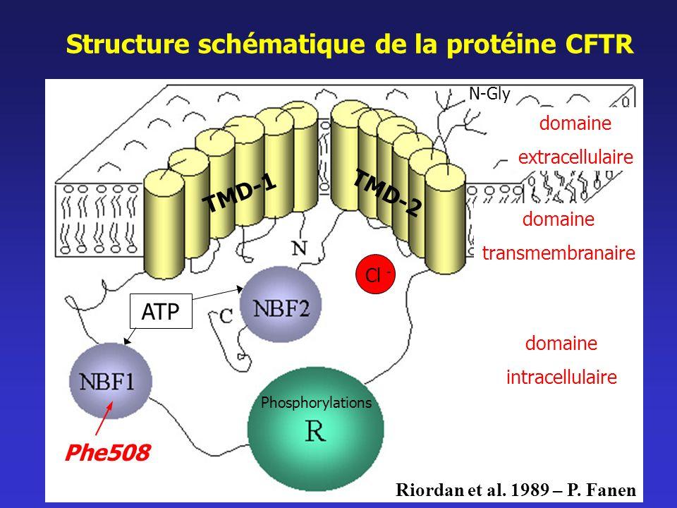 Structure schématique de la protéine CFTR domaine extracellulaire domaine intracellulaire N-Gly Phe508 Cl - domaine transmembranaire Riordan et al. 19