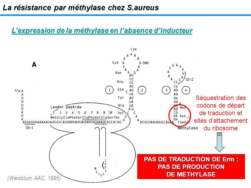 Lexpression de la méthylase en labsence dinducteur La résistance par méthylase chez S.aureus Séquestration des codons de départ de traduction et sites