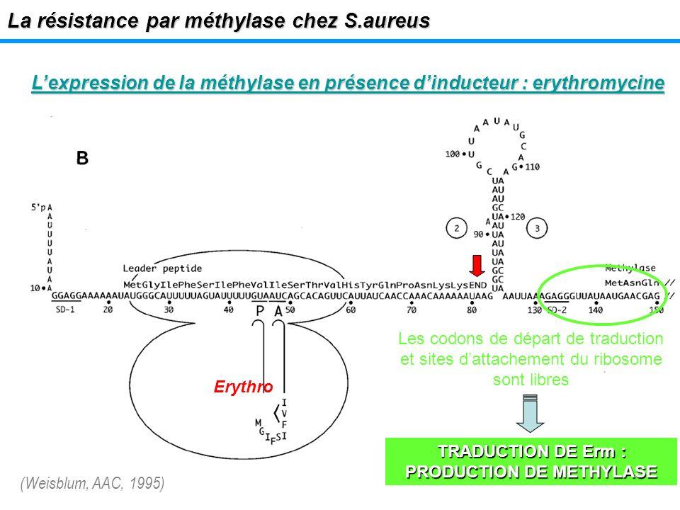 Lexpression de la méthylase en présence dinducteur : erythromycine La résistance par méthylase chez S.aureus Les codons de départ de traduction et sit