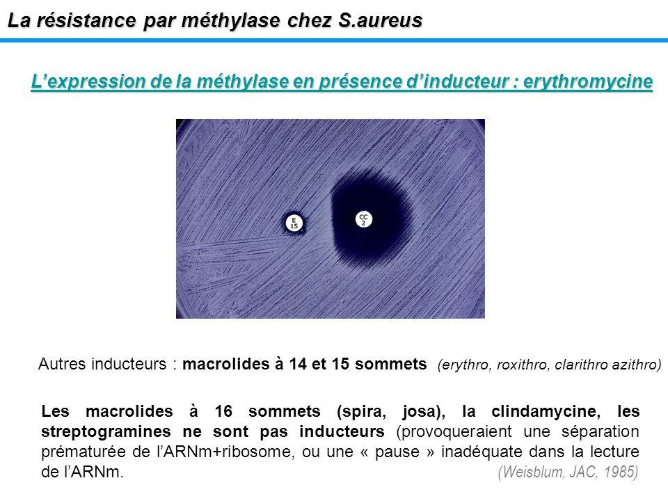 Lexpression de la méthylase en présence dinducteur : erythromycine La résistance par méthylase chez S.aureus Autres inducteurs : macrolides à 14 et 15