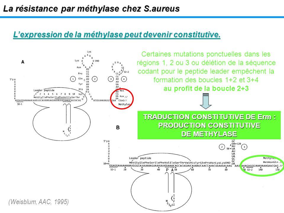 Lexpression de la méthylase peut devenir constitutive. La résistance par méthylase chez S.aureus Certaines mutations ponctuelles dans les régions 1, 2