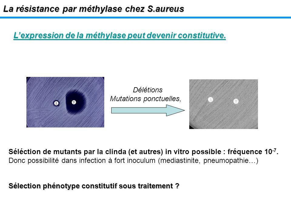 La résistance par méthylase chez S.aureus Lexpression de la méthylase peut devenir constitutive. Délétions Mutations ponctuelles, Sélection phénotype
