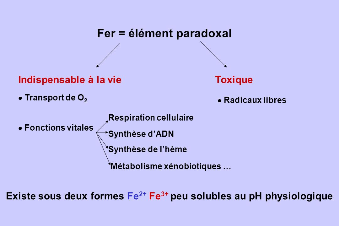 Synthèse de lhème Fer = élément paradoxal Indispensable à la vie Toxique Transport de O 2 Respiration cellulaire Fonctions vitales Synthèse dADN Radic