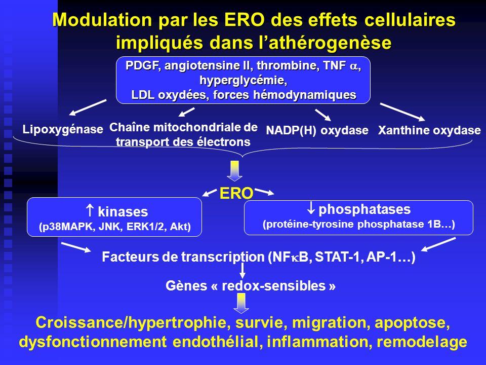 LO ERO (O 2, OH, ROO, ONOO -, HOCl) LDL LDL-LOOH LDL-MM Macrophage Récepteur scavenger LDL oxydées Monocyte protéoglycanes Cellules musculaires lisses Lamina Cellules endothéliales Monocyte Rétention et modification des LDL dans la paroi artérielle (daprès Van Lenten et al., Trends Cardiovasc.