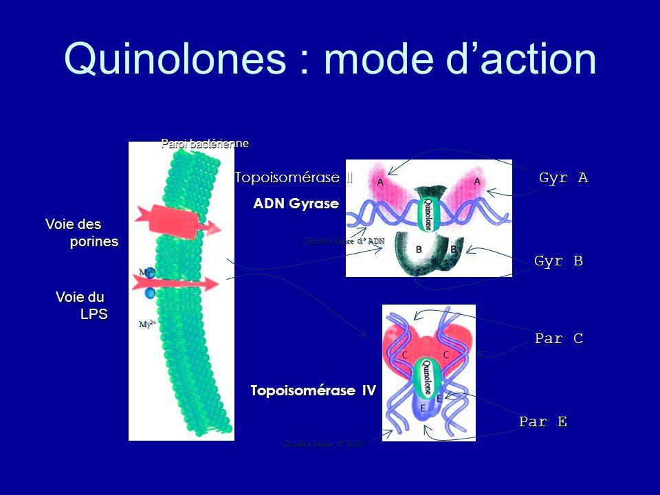 Quinolones : mode daction Paroi bactérienne Voie des porines Voie du LPS Mg 2+ Topoisomérase II ADN Gyrase ADN Gyrase Topoisomérase IV Double hélice d