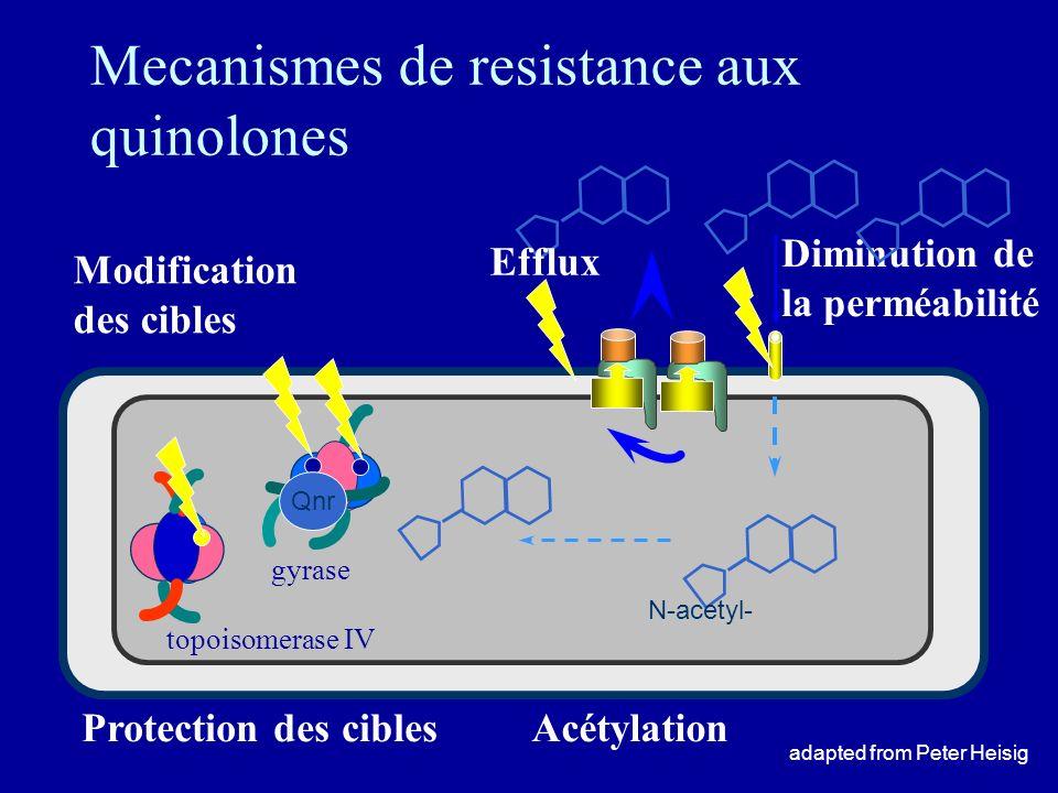 Mecanismes de resistance aux quinolones Diminution de la perméabilité Efflux gyrase topoisomerase IV Modification des cibles adapted from Peter Heisig