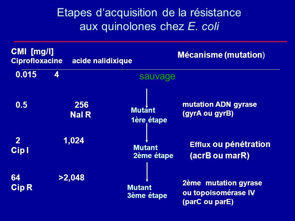 sauvage Mutant 1ère étape Mutant 2ème étape Mutant 3ème étape mutation ADN gyrase (gyrA ou gyrB) 2ème mutation gyrase ou topoisomérase IV (parC ou par