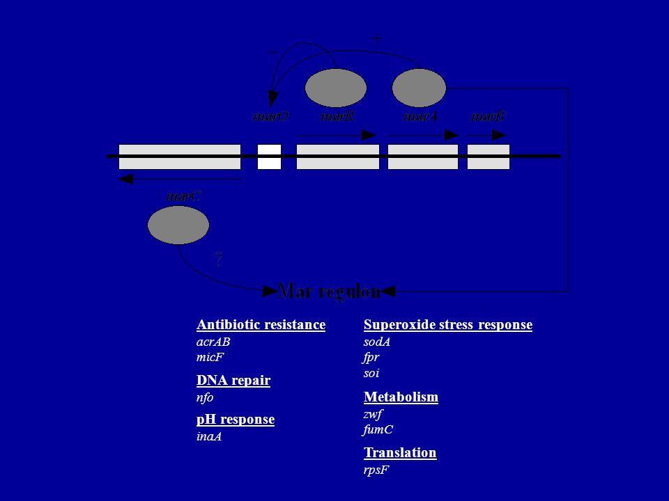 Antibiotic resistanceSuperoxide stress response acrAB micF DNA repair nfo sodA fpr soi pH response inaA Metabolism Translation zwf fumC rpsF