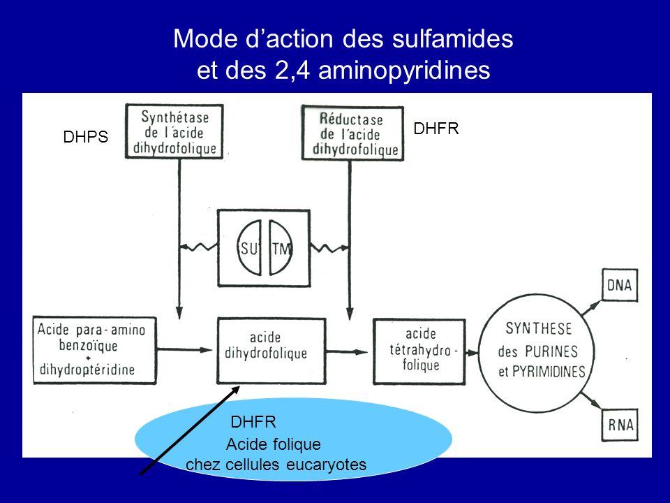 DHFR DHPS Acide folique chez cellules eucaryotes DHFR Mode daction des sulfamides et des 2,4 aminopyridines