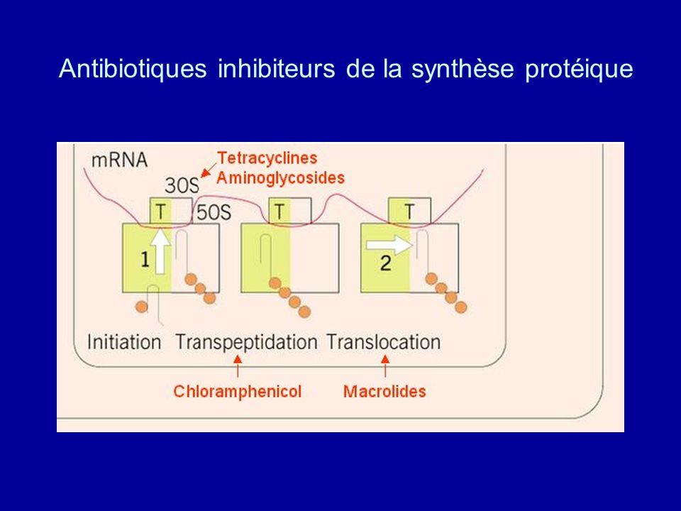 Antibiotiques inhibiteurs de la synthèse protéique