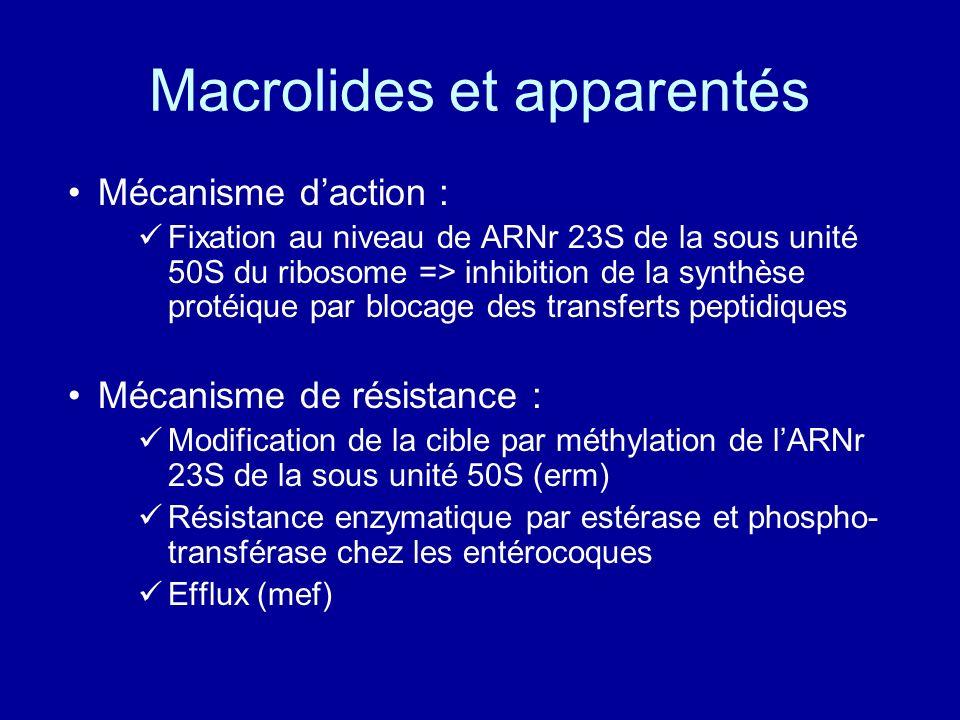 Macrolides et apparentés Mécanisme daction : Fixation au niveau de ARNr 23S de la sous unité 50S du ribosome => inhibition de la synthèse protéique pa