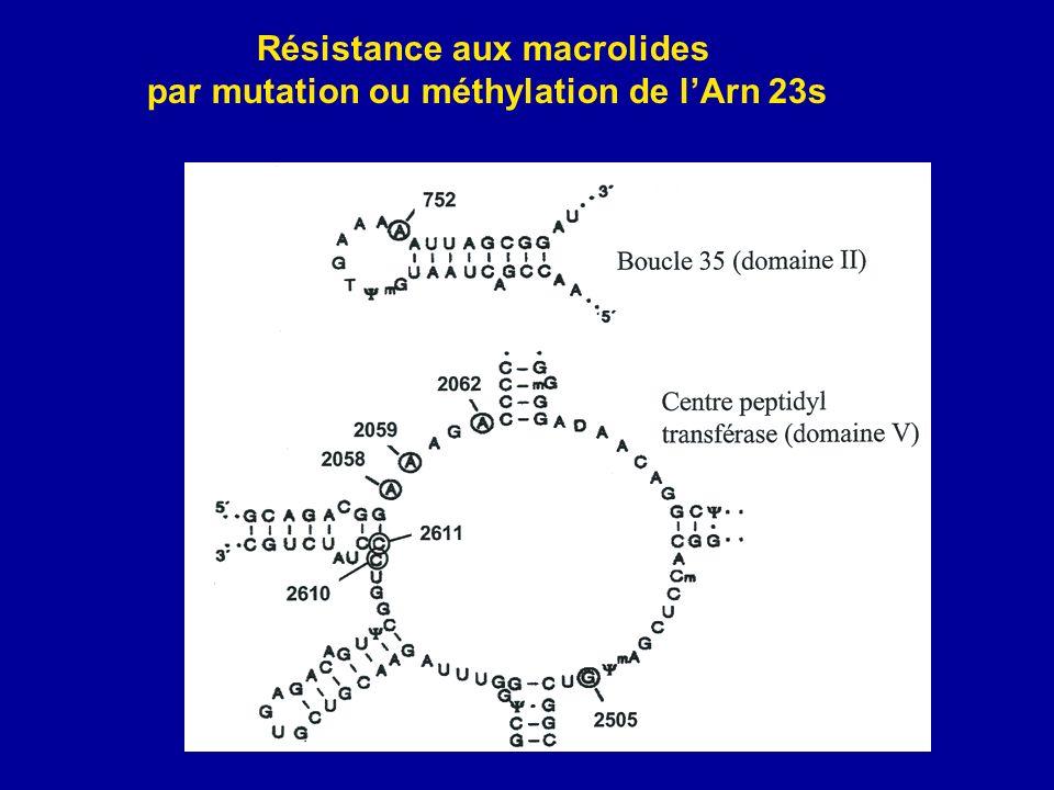 Résistance aux macrolides par mutation ou méthylation de lArn 23s