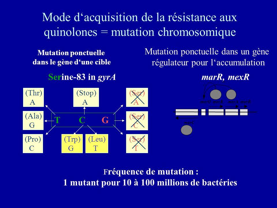 Mode dacquisition de la résistance aux quinolones = mutation chromosomique Serine-83 in gyrA Mutation ponctuelle dans le gène dune cible T C G (Thr) A