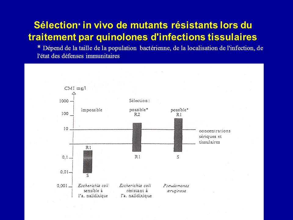 * Dépend de la taille de la population bactérienne, de la localisation de l'infection, de l'état des défenses immunitaires Sélection * in vivo de muta