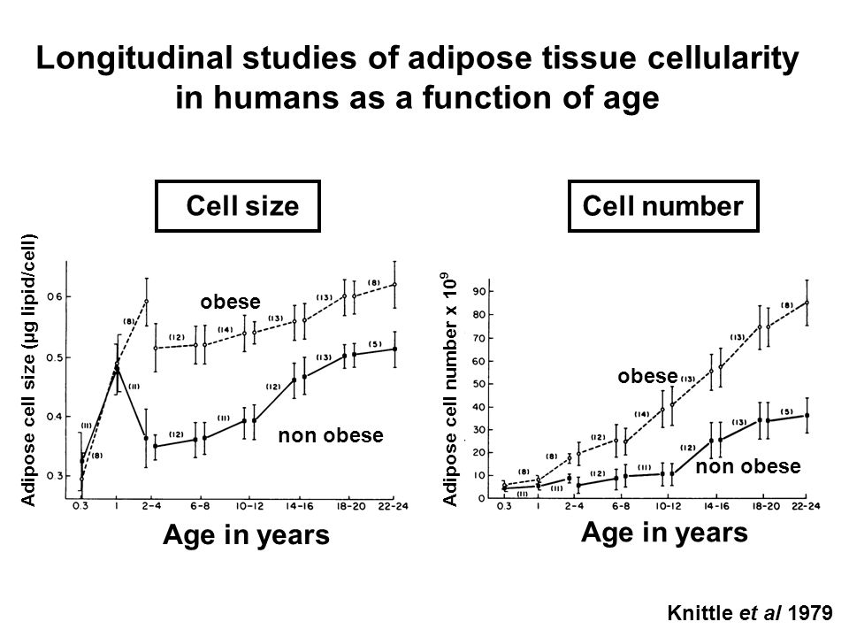 Longitudinal studies of adipose tissue cellularity in humans as a function of age Cell size Cell number Age in years Adipose cell size (µg lipid/cell)