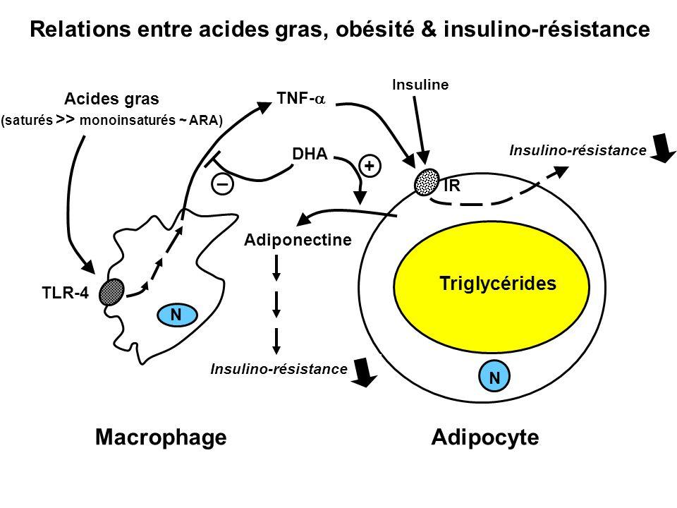 DHA + _ MacrophageAdipocyte TNF- Insuline Acides gras (saturés >> monoinsaturés ~ ARA) TLR-4 N Adiponectine Insulino-résistance N IR Insulino-résistan